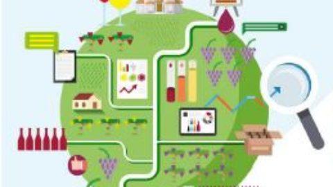 Analyse vitivinicole des principaux pays producteurs dans le monde