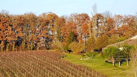 L'avenir est-il au bocage viticole ?