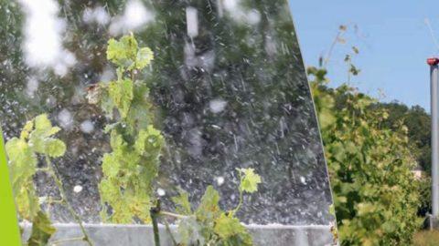 Recommandations contre la grêle et le gel de printemps