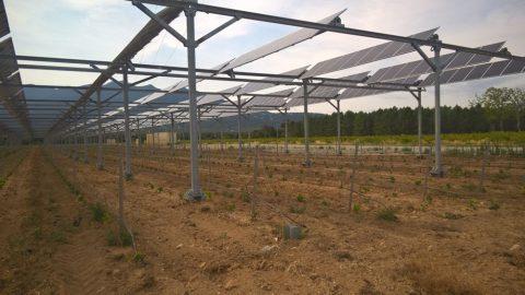 Sun'R : le premier projet vitivoltaïque est né dans les P.-O.