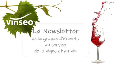Newsletter Vinseo #25 – Mai 2019