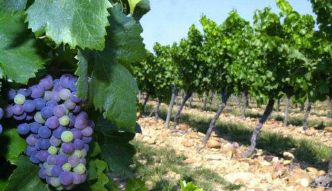 Jean-Louis Escudier : « Il faut aller du vin à la vigne et non l'inverse »