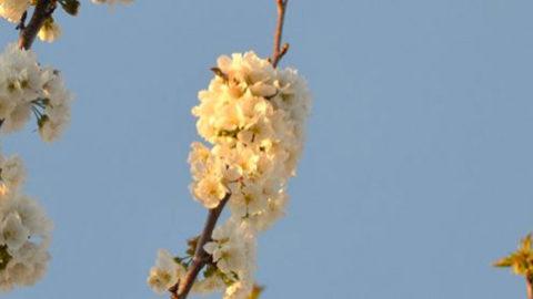 Le printemps juridique de Vinseo