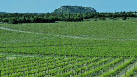 Tendances et perspectives de la filière vigne et vin
