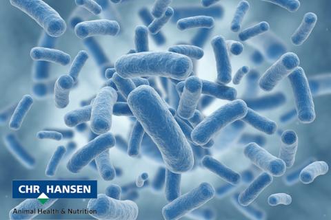 """Chr Hansen : des """"bonnes bactéries"""" aux portes de Montpellier"""