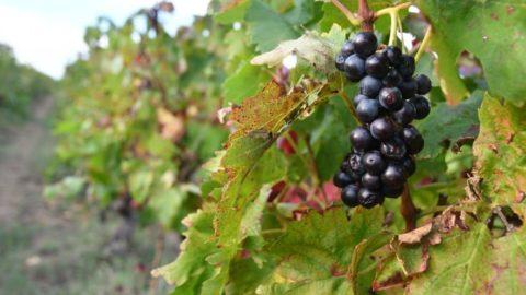 Iprocess, un process vinicole à dimension humaine
